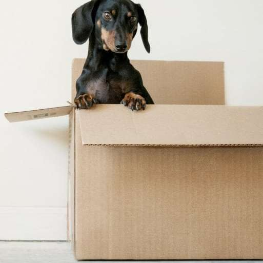 The Essential Guide to a Cross-Country Move with Pets